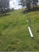 Picture of Dog- Fence (Max- Loc Dog fence)