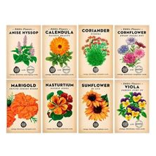 Picture of Little Veggie Patch Co Seeds