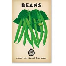Picture of Little Veggie Patch Co Seeds - Beans 'Windsor Long Pod'