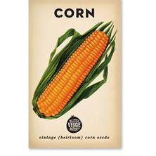 Picture of Little Veggie Patch Co Seeds - Corn 'Sweet'